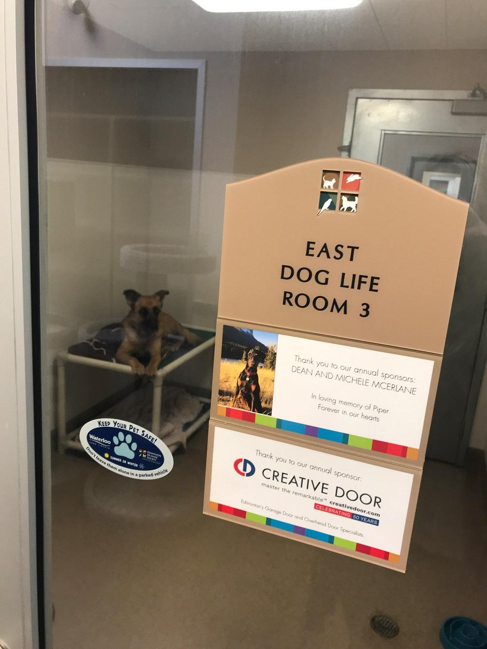 Edmonton-Humane-Society-Bottle-Drive-6.jpg?mtime=20191115205115#asset:15220