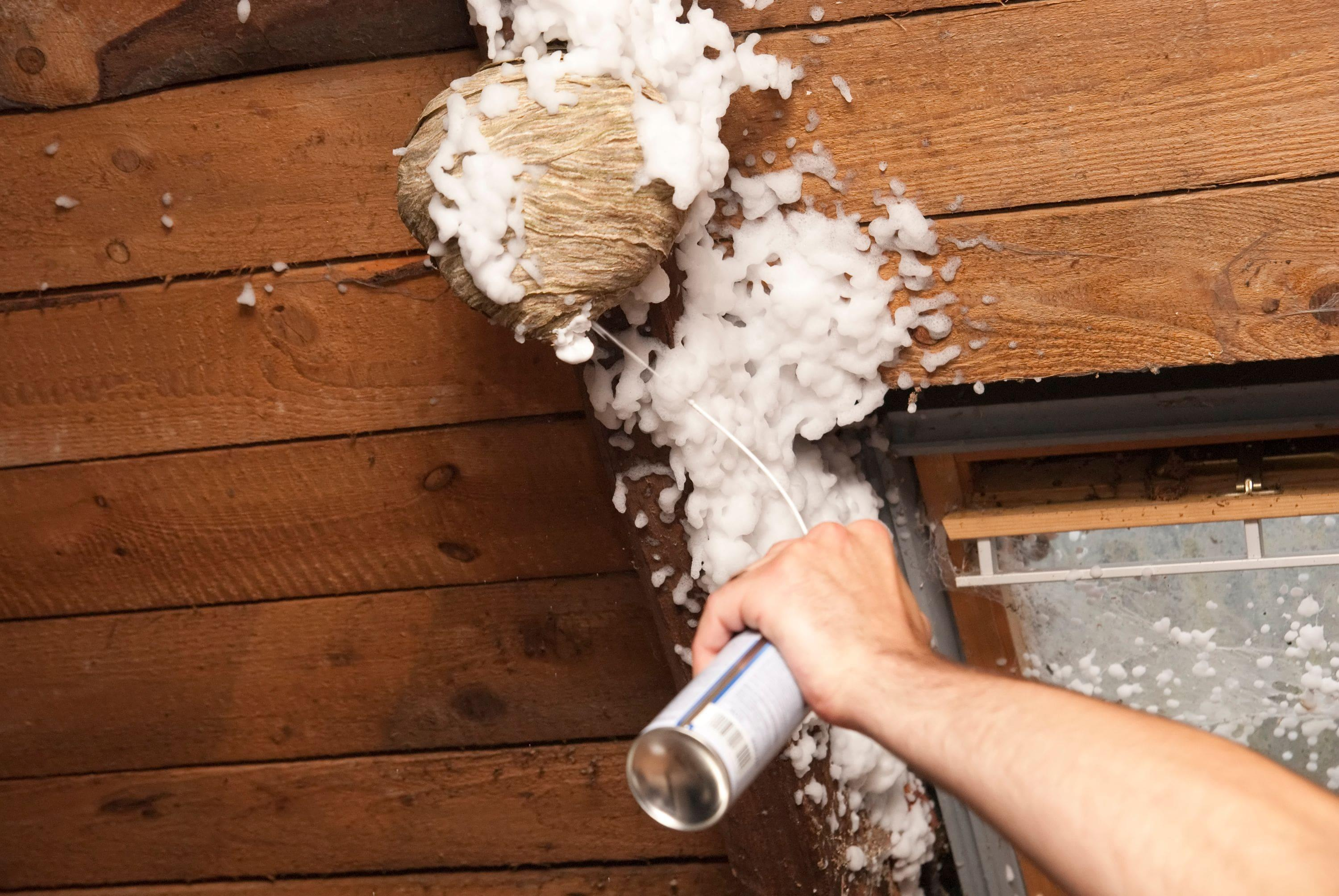 spraying a wasps nest with pesticide foam